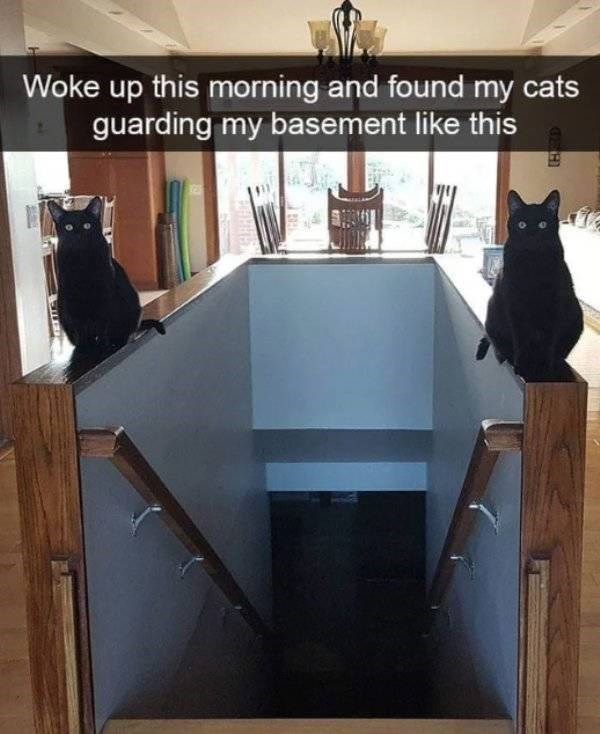cat job - Cat - Woke up this morning and found my cats guarding my basement like this