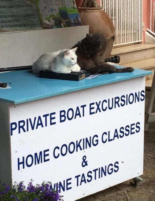 cat job - Cat - EASE COME TO OUR OFFICE CLO DI POSITANO O CH CASA 9 875475 58.18 SALVATRE 36 3 PRIVATE BOAT EXCURSIONS HOME COOKING CLASSES & NE TASTINGS