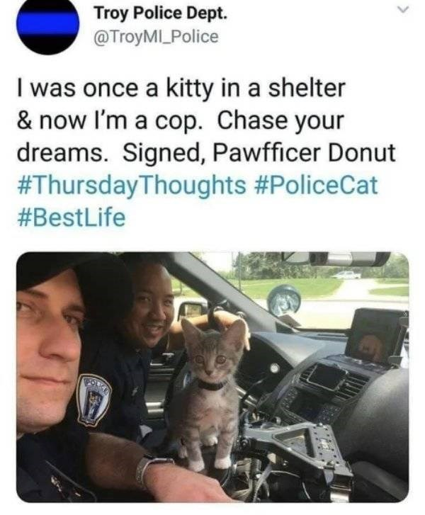 cat job - Motor vehicle - Troy Police Dept. @TroyMILPolice I was once a kitty in a shelter & now I'm a cop. Chase your dreams. Signed, Pawfficer Donut #ThursdayThoughts #PoliceCat #BestLife