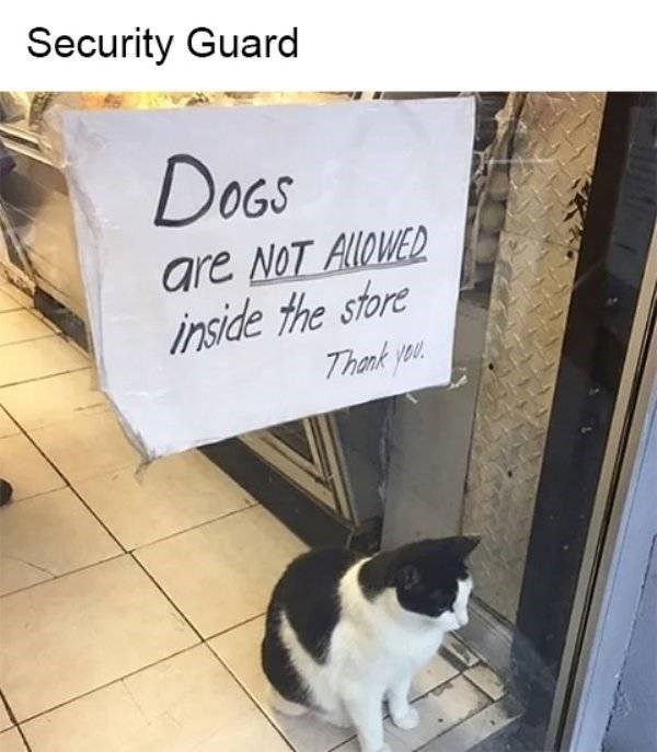 cat job - Cat - Security Guard DOGS are NoT AlloWED inside the store Thank you