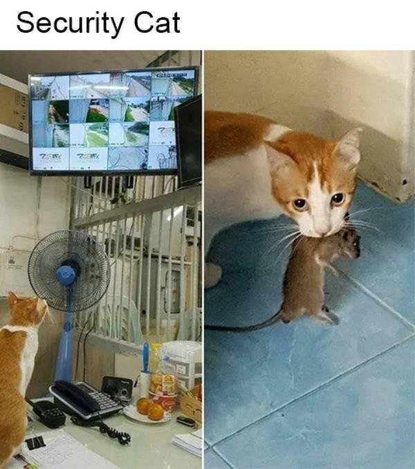 cat job - Cat - Security Cat 7