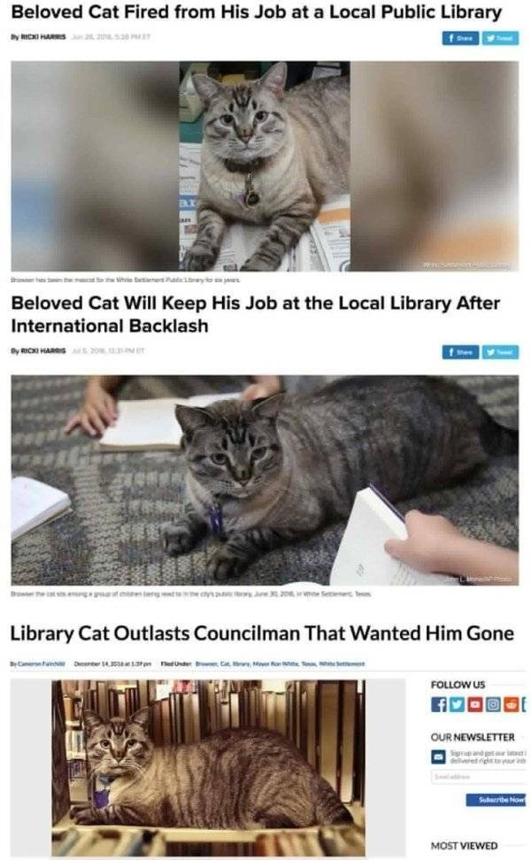 cat job - Cat - Beloved Cat Fired from His Job at a Local Public Library fhe hasr ies th h et yle Beloved Cat Will Keep His Job at the Local Library After International Backlash Dy mICKI HARS 20 owser the s g t begtt ys Je 32 e Seee eo Library Cat Outlasts Councilman That Wanted Him Gone D 4 edUste bne Cat o et BCner FOLLOW US OUR NEWSLETTER delret iglttyr Suribe Now MOST VIEWED