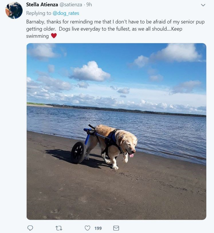 senior dog - Canidae - Stella Atienza @satienza 9h Replying to @dog rates Barnaby, thanks for reminding me that I don't have to be afraid of my senior pup getting older. Dogs live everyday to the fullest, as we all should... .Keep swimming 199