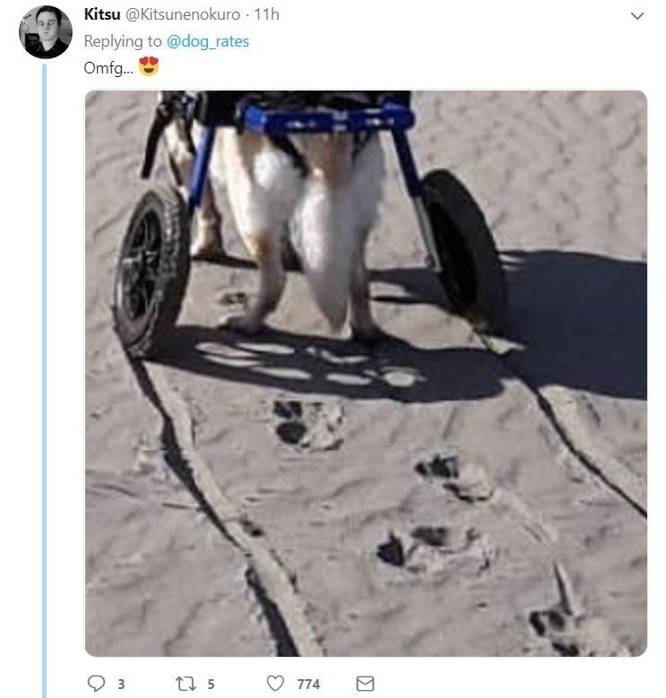 senior dog - Vehicle - Kitsu @Kitsunenokuro 11h Replying to @dog_rates Omfg.. t5 774