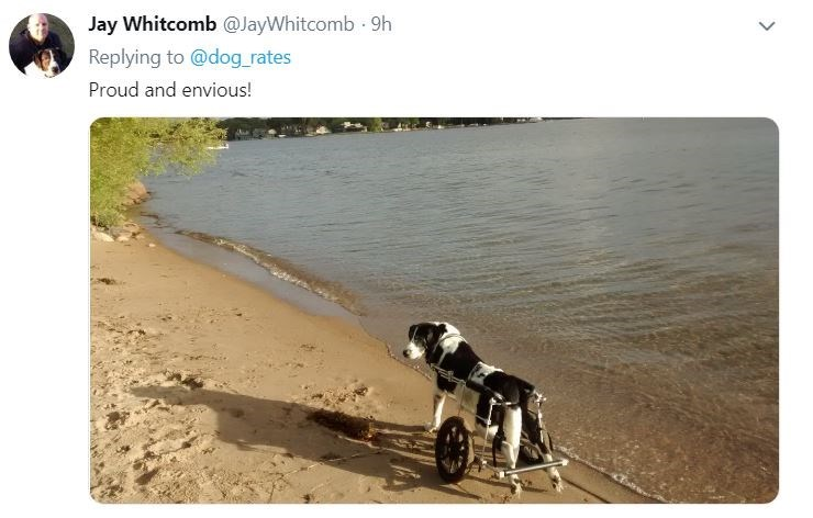senior dog - Canidae - Jay Whitcomb @JayWhitcomb .9h Replying to @dog rates Proud and envious!