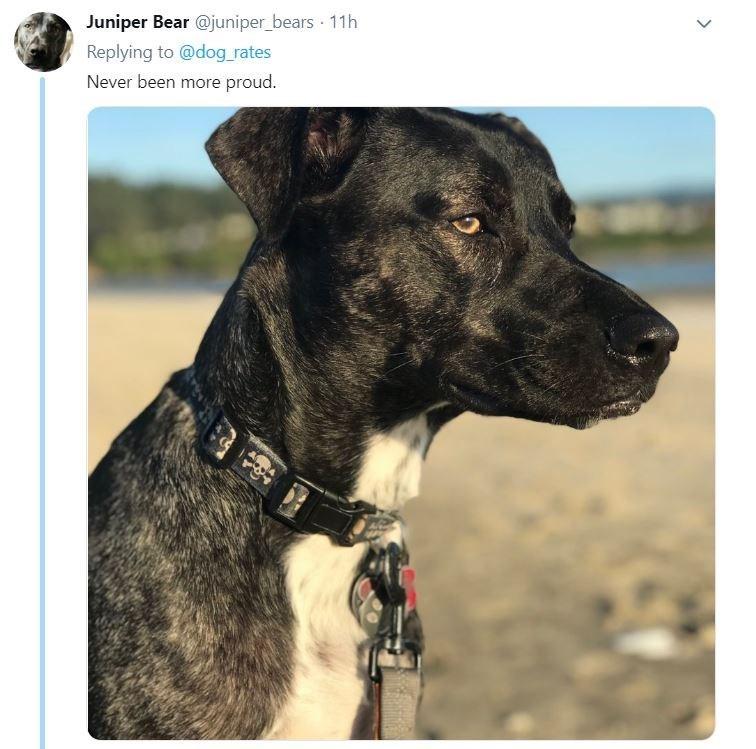 senior dog - Dog - Juniper Bear @juniper_bears 11h Replying to@dog rates Never been more proud.