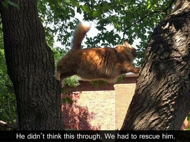 Funny cat meme of a cat that is stuck in tree with two different sets of paws on two separate branches
