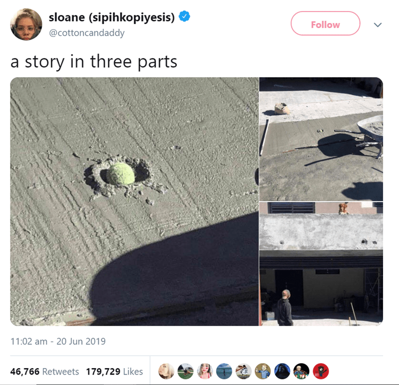 funny animal tweets - - Text - sloane (sipihkopiyesis) Follow @cottoncandaddy a story in three parts 11:02 am 20 Jun 2019 46,766 Retweets 179,729 Likes