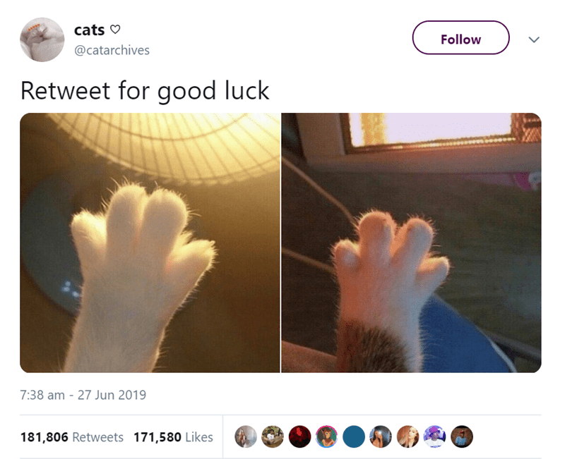 funny animal tweets - - Hand - cats Follow @catarchives Retweet for good luck 7:38 am - 27 Jun 2019 181,806 Retweets 171,580 Likes