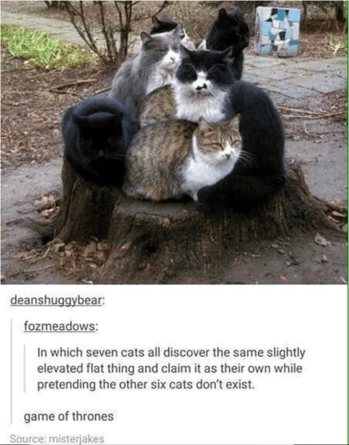 Cat - deanshuggybear fozmeadows: In which seven cats all discover the same slightly elevated flat thing and claim it as their own while pretending the other six cats don't exist. game of thrones Source: misterjakes