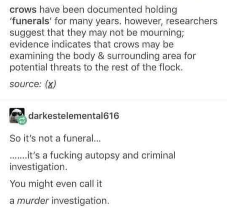 Text - crows have been documented holding 'funerals' for many years. however, researchers suggest that they may not be mourning; evidence indicates that crows may be examining the body&surrounding area for potential threats to the rest of the flock. source: (x) darkestelemental616 So it's not a funeral... ..t's a fucking autopsy and criminal investigation. You might even call it a murder investigation.