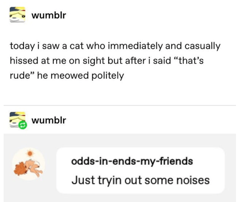 """Text - wumblr today i saw a cat who immediately and casually hissed at me on sight but afteri said """"that's rude"""" he meowed politely wumblr odds-in-ends-my-friends Just tryin out some noises"""
