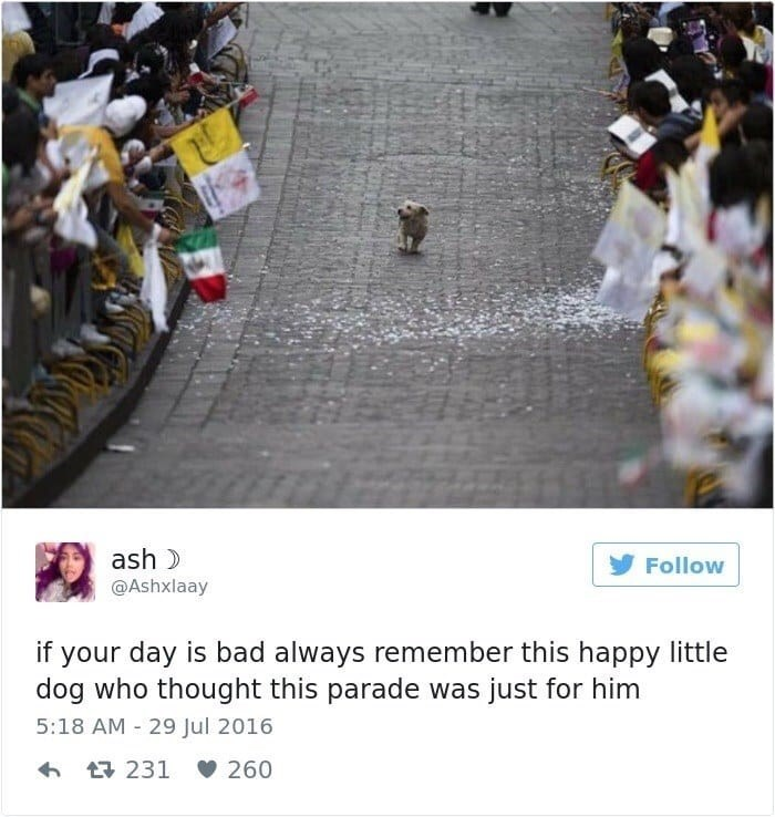 People - ash Follow @Ashxlaay if your day is bad always remember this happy little dog who thought this parade was just for him 5:18 AM 29 Jul 2016 260 t231