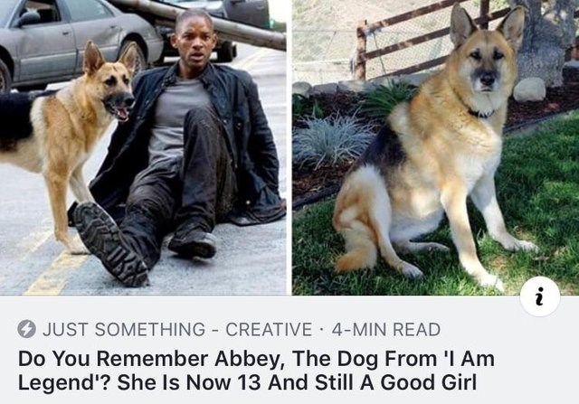 Dog - JUST SOMETHING CREATIVE 4-MIN READ Do You Remember Abbey, The Dog From I Am Legend'? She Is Now 13 And Still A Good Girl