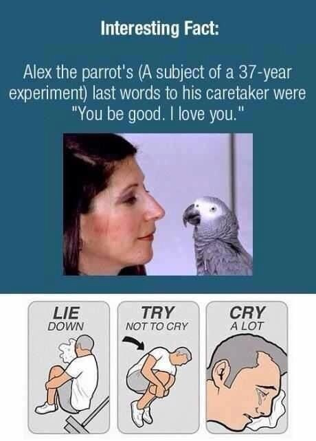 Sad aww facts message sweet parrot - 9325918208