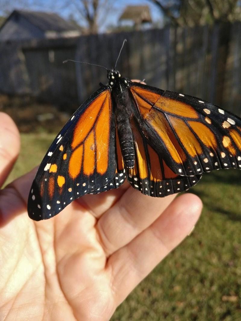 Moths and butterflies