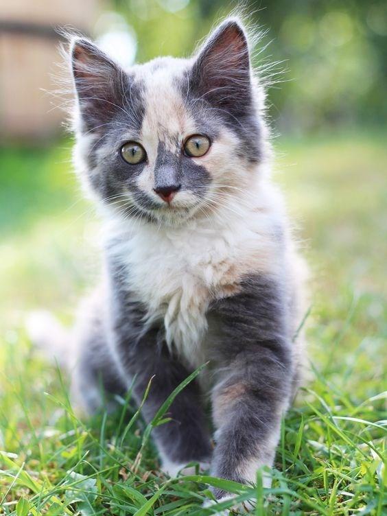 Cat ear fuzz