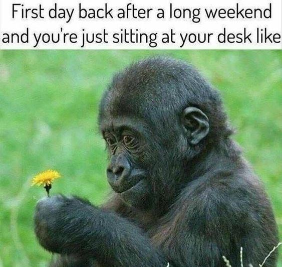 vacation meme - Vertebrate - First day back after a long weekend and you're just sitting at your desk like