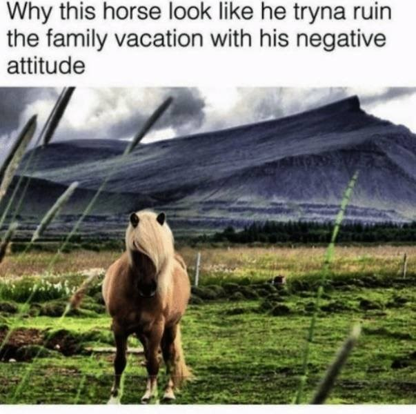 vacation meme - Horse - Why this horse look like he tryna ruin the family vacation with his negative attitude