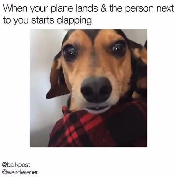 vacation meme - Dog - When your plane lands & the person next to you starts clapping @barkpost @weirdwiener
