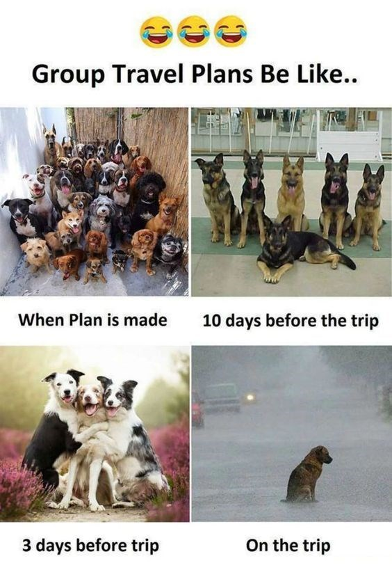 vacation meme - Canidae - Group Travel Plans Be Like. When Plan is made 10 days before the trip 3 days before trip On the trip