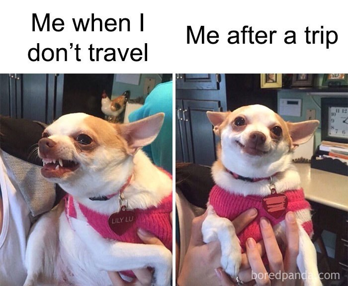 vacation meme - Dog - Me when I Me after a trip don't travel I1 12 7 6 LILY LU boredpanda com