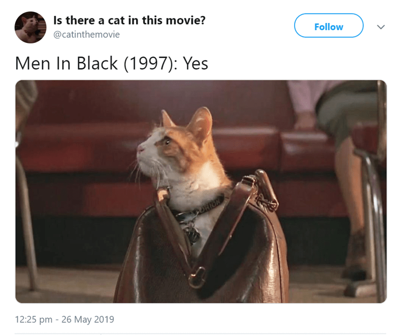 Photo caption - Is there a cat in this movie? @catinthemovie Follow Men In Black (1997): Yes DRION 12:25 pm 26 May 2019 -