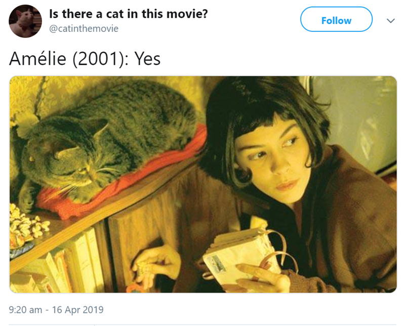 Text - Is there a cat in this movie? Follow @catinthemovie Amélie (2001): Yes 9:20 am 16 Apr 2019