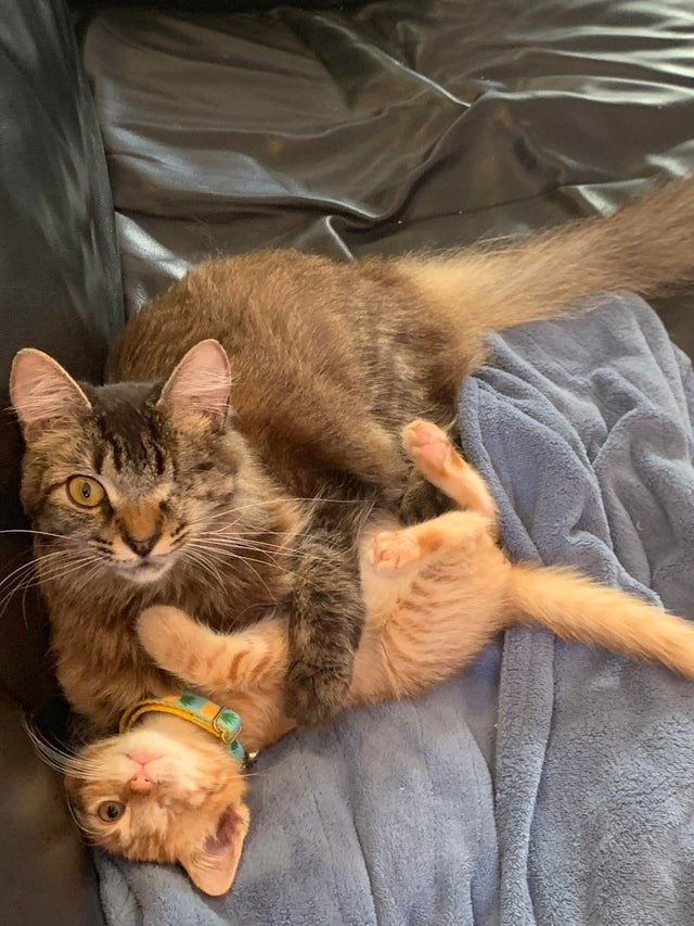 Cats snuggling and wrestling, both are missing one eye
