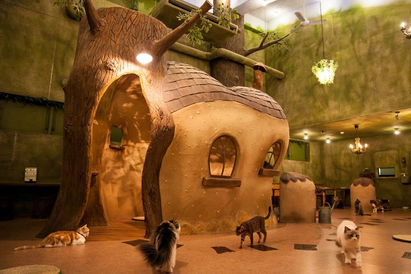 cat house - Tourist attraction
