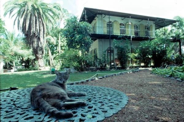 cat house - Felidae
