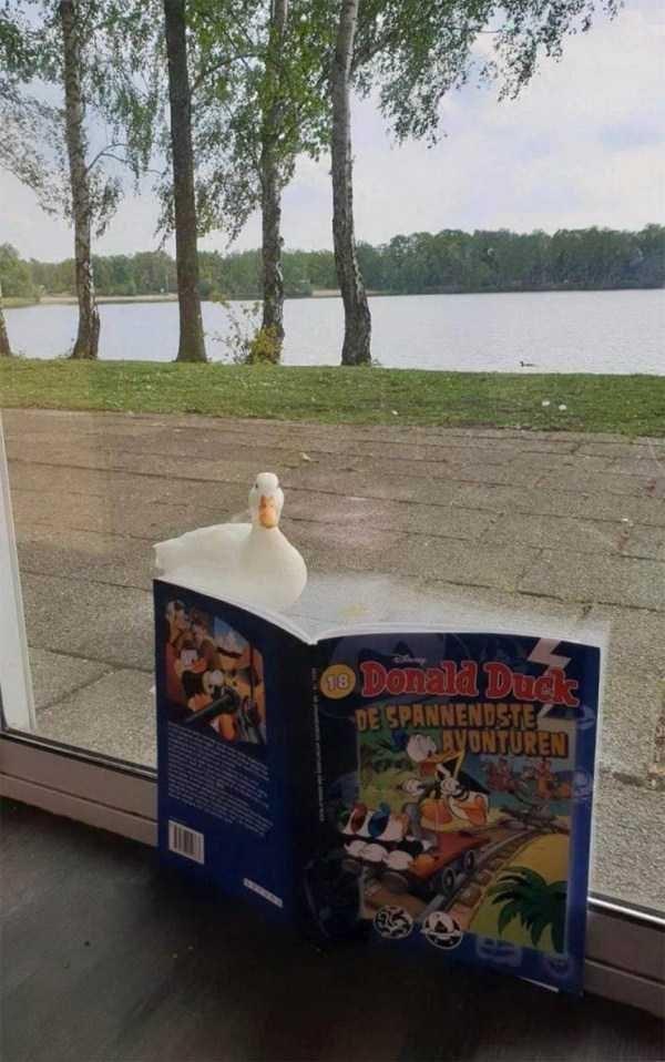 Table - Donald Duck DE SPANNENDSTE AVONTUREN 18