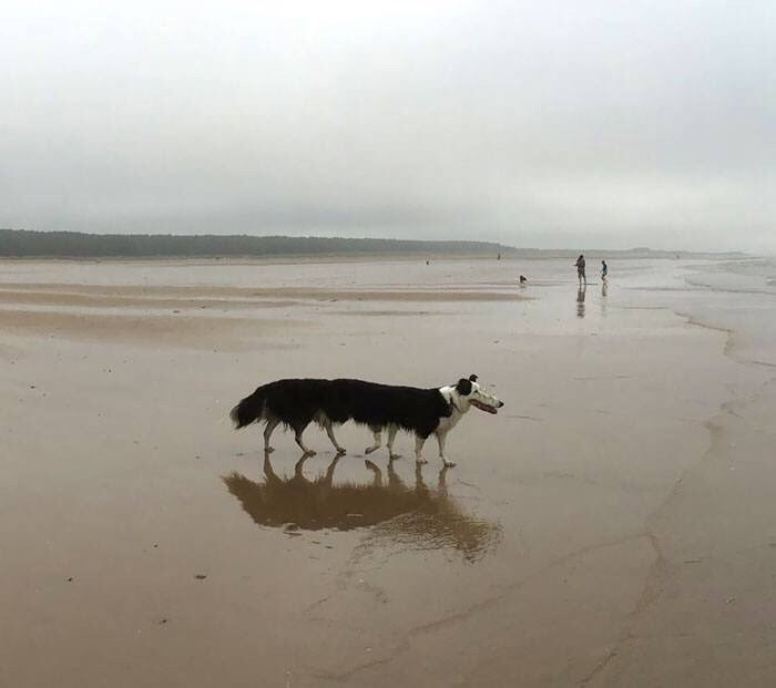 panoramic fail dog - Sand