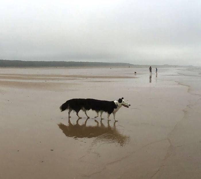 panoramic fail dog - Sand