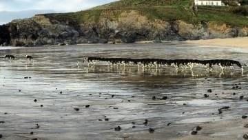 panoramic fail dog - Shore
