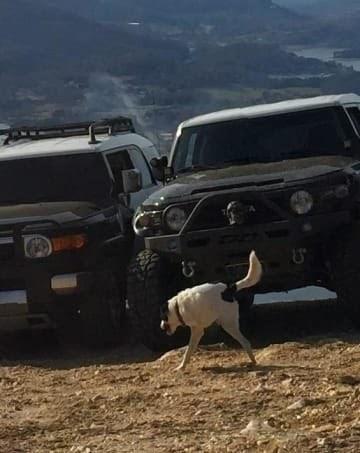 panoramic fail dog - Vehicle