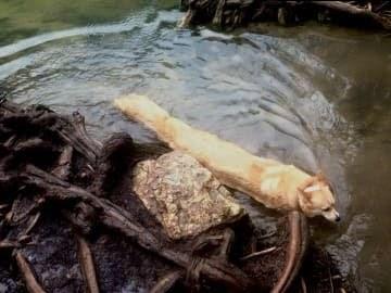 panoramic fail dog - Water