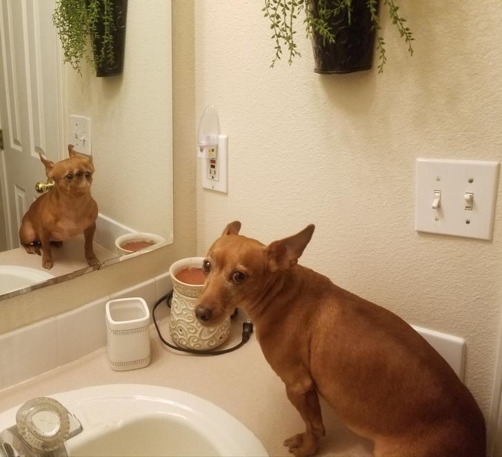 panoramic fail dog - Canidae