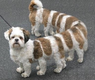 panoramic fail dog - Dog