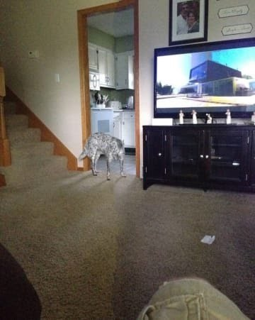 panoramic fail dog - Property