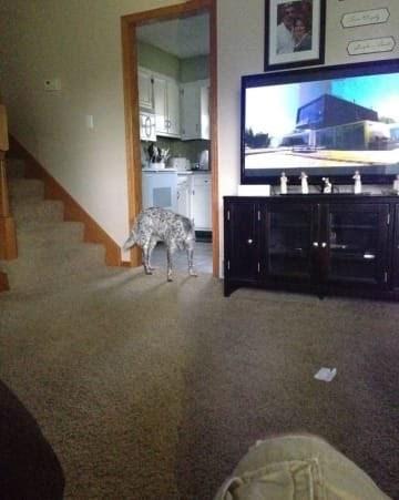 panoramic fail dog - Property