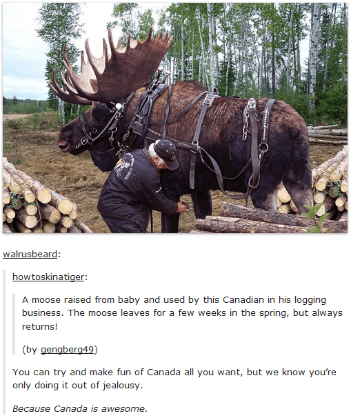 Meme - Organism - walrusbeard: how toskinatiger: A moose raised from baby and used by this Canadian in his logging business. The moose leaves for a few weeks in the spring, but always returns! (by gengberg49) You can try and make fun of Canada all you want, but we know you're only doing it out of jealousy. Because Canada is awesome.