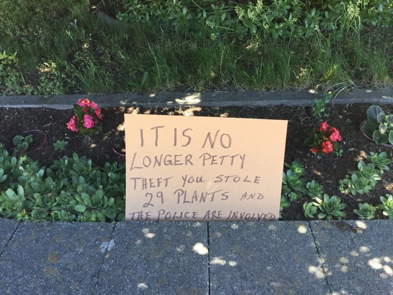 trashy - Text - IT IS NO LONGER PETTTY THEFT You STOLE 29 PLANTS AND THE POLICE ARE INVOLVE