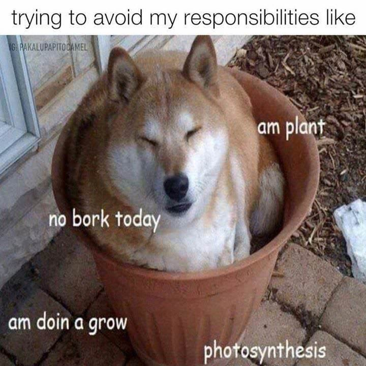 Mammal - trying to avoid my responsibilities like GAPAKALUPAPITOCAMEL am plant no bork today am doin a grow photosynthesis