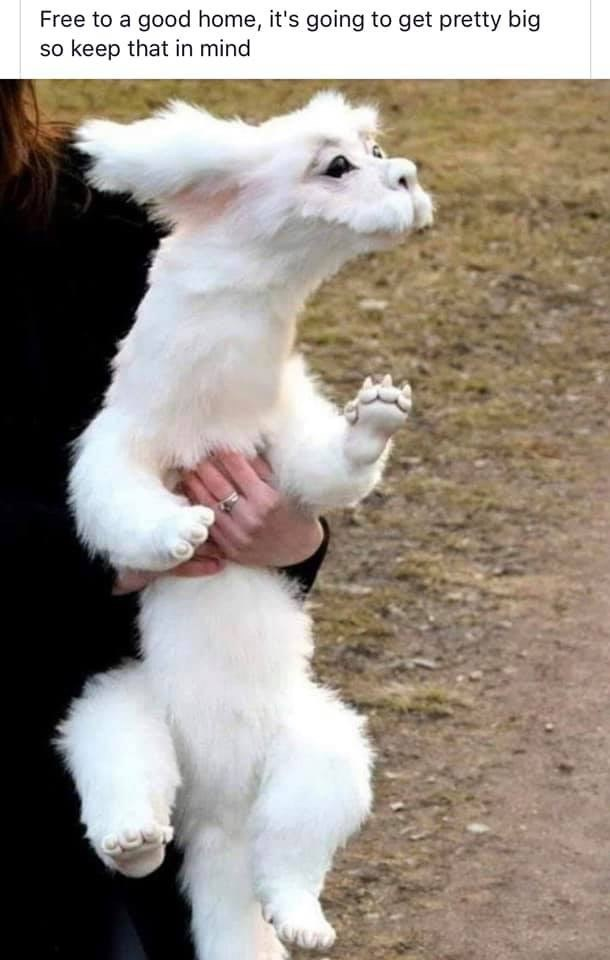 meme of a puppy that looks like the huge dog from Never Ending Story