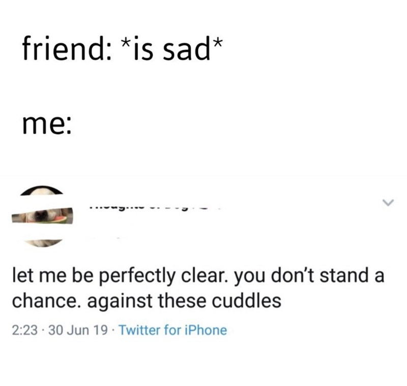 meme - Text - friend: *is sad* me: let me be perfectly clear. you don't stand a chance. against these cuddles 2:23 30 Jun 19 Twitter for iPhone