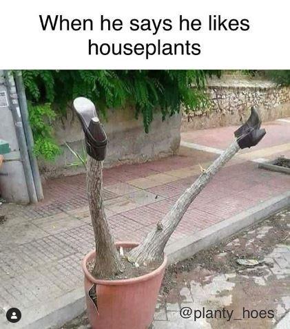 Meme - Plant - When he says he likes houseplants @planty hoes