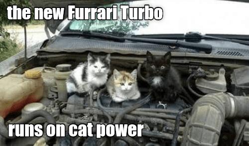 ferrari mechanic cat memes - 9326316800