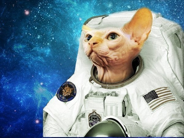 cat in space - Sphynx - eEAN eers