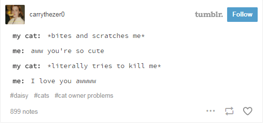 Text - tumblr. Follow carrythezer0 *bites and scratches me* my cat: you're so cute me: aww my cat: literally tries to kill me I love you awwww me: #daisy #cats #cat owner problems 899 notes